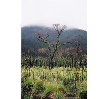 Regrowth in the Mist Photographic Print