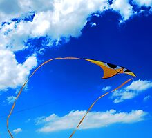 flying away by Mark Malinowski