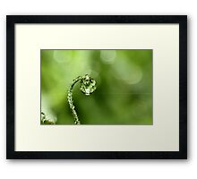 Early Morning Dew Framed Print