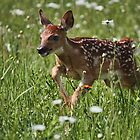 Frolicking Fawn by by M LaCroix