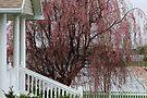 Spring in Farr West, Utah by Jan  Tribe