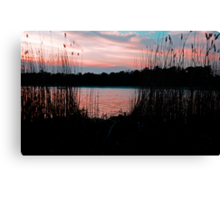 Through the Reeds Canvas Print