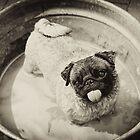 Dog Wash by Milan van de Goor