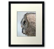 owl in profile Framed Print