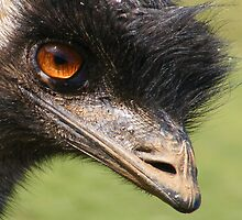 Portrait of an emu. by Esther's Art and Photography