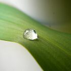 A Slow Descent, Dew Falling by joshquag