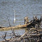 Egret and Turtle by elisab