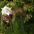 Hiding Wolves by by M LaCroix