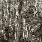 Paperbark and Palms by PeterDamo
