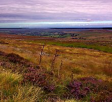 North Yorks Moors National Park by Trevor Kersley