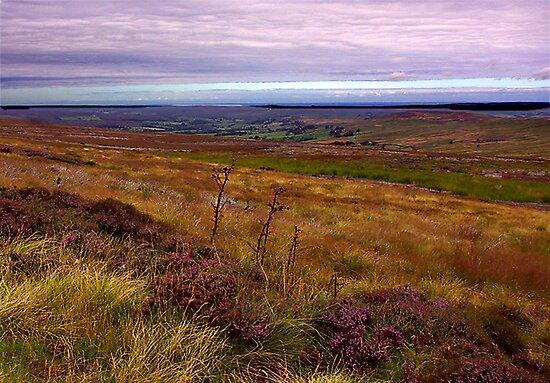 North Yorks Moors National Park by Trevor Kersley