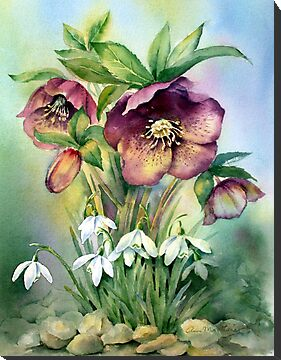 Snowdrops and Hellebores by Ann Mortimer