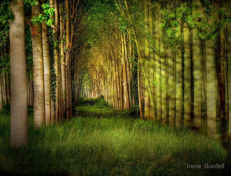 For Tree Lovers  by Irene  Burdell