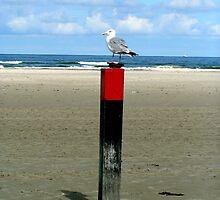Rusty lock case guarded by a Seagull  by patjila