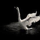 Swan Dance at Night by LarsvandeGoor