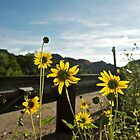 roadside sunflowers by Mark de Jong