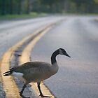 why did the goose cross the road? by Mark de Jong