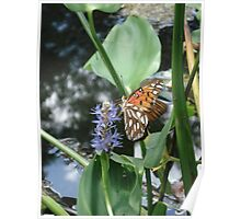 GULF FRITILLARY ON PICKEREL WEED Poster
