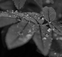 Drops of dark by Kim Alexander Olsen