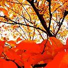 orange. by yeahitsanton