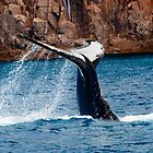 Whale Tail Display by Chris  Randall