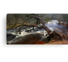Fallen tree trunk Canvas Print