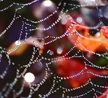 spiders web by Declan Carr