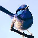 Little Blue Boy by inAWE