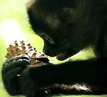 Black-Handed Spider Monkey by Tamara  Kenneally