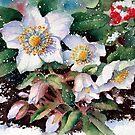 Snowy Hellebores by Ann Mortimer