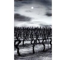 Vineyard Moon Photographic Print