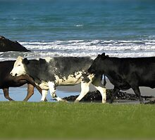 The cows had a great day on the beach. by tiggertastic