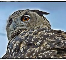 """"""" I'm staying put, so you can Hoot off"""" by mrcoradour"""