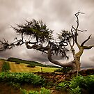 Tree by PaulBradley