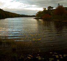 Cape Breton river in fall - Nova Scotia by Harv Churchill