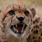 Murphy the Cheetah by JMChown