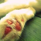 Kitty Cat Paws Are Cute by JessFlint