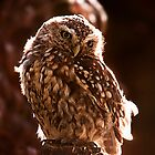 Little Owl by Simon Marsden
