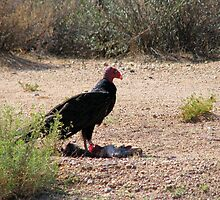 """Dinner is served"" Turkey Vulture by Sherry Pundt"