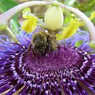 Bee~autiful Passion Flower by Kimberly Chadwick