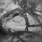 Bent Gum Tree by suziimages