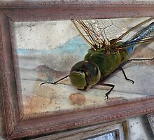 Dragon Fly  by Michael  Gunterman