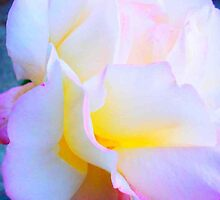 Peace Rose - So Delicate by Carol Appelbee