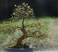Bonsai! by Rees Adams