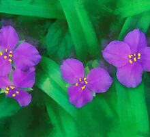 Spiderwort Flowers by rok-e