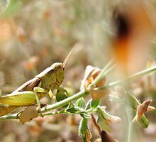 Hopper Hiding In The Grass by Spiiral