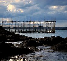""" Campobello Weirs "" by Gerry Myers"