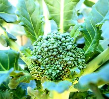 My Broccoli Garden by Photokid07