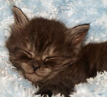 Little Grey Kitten by R. Fyfe