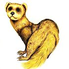 Who are you calling ferret face?447 views as at 15th Feb 2012 by Margaret Sanderson